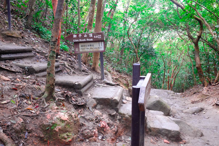 Continue straight for Maclehose Trail Section 5; turn left for Lion Rock Peak.